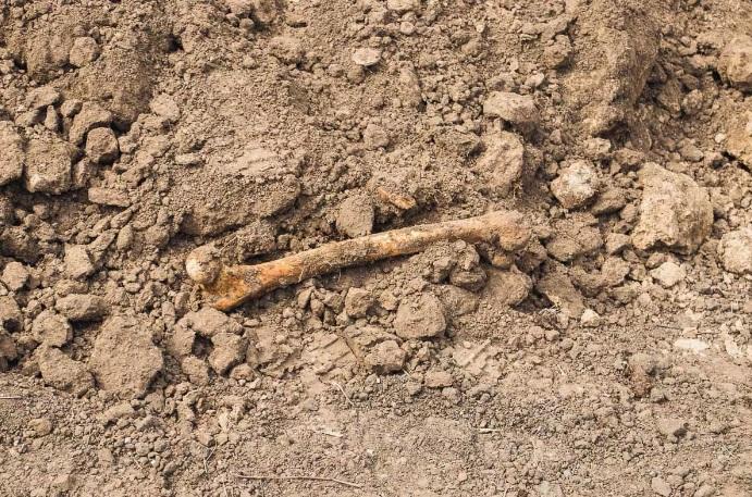 кости земля останки