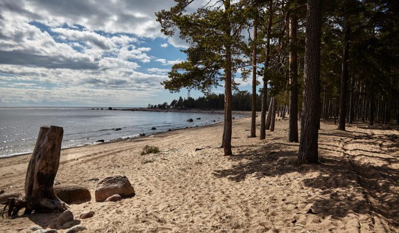 пляж финский залив петербург